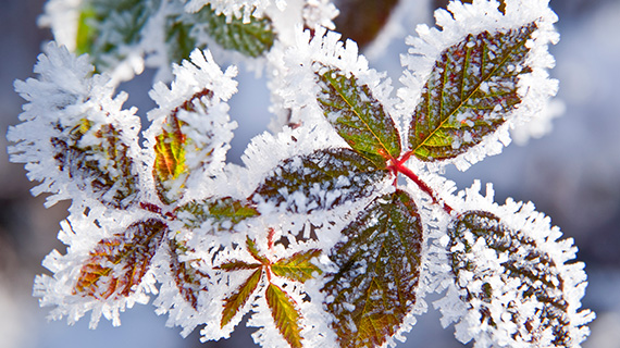 Winter Frost Protection Plant Covers Tencate